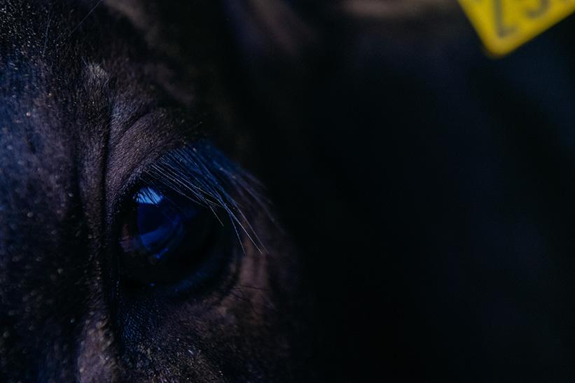 宮崎牛の目