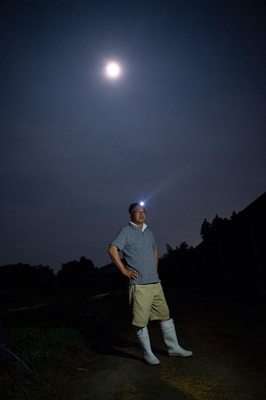 宮崎牛の夜の観察