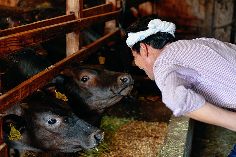 優しく牛を見守る日高さん